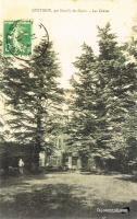 quetigny 1914 Cedres.jpg